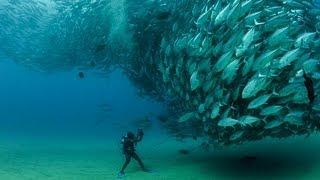 Download TUNA TORNADO - Huge Swarm of Jack Fish Dwarf Scuba Diver Video