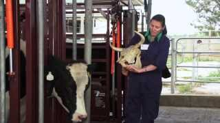 Download Explore Veterinary Science Video