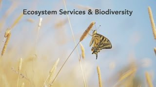 Download Ecosystem services and Biodiversity - Science for Environment Policy Video