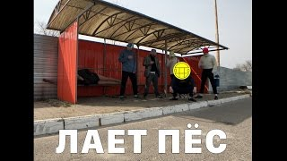 Download МБР - Лает пёс [″Тает Лед″ гр. Грибы] Video