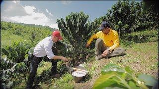 Download Fertilización Efectiva del Café, Tips del Profesor Yarumo Video