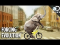 Download Cities Are Forcing Animals To Evolve Faster Than Normal Video