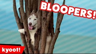 Download The Cutest Animals of 2016 | Bloopers, Outtakes, and BTS Video
