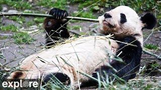 Download Happiness Village Baby Panda Garden Video