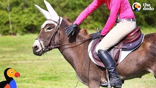 Download Donkey Loves Jumping With Her Mom   The Dodo Video