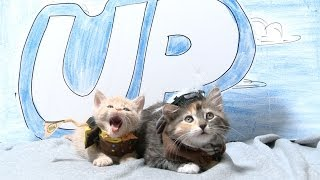 Download Disney Pixar's Up (Cute Kitten Version) Video