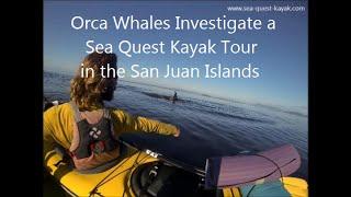 Download Orcas Investigate Kayaks - Sea Quest Kayak Tours - San Juan Islands Video