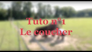 Download Tuto n°2 : comment apprendre le coucher à son âne (méthode douce) Video