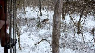 Download Traditional Bowhunt Video