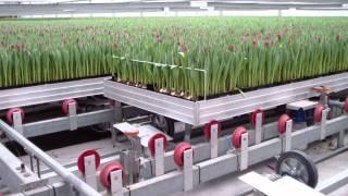 Download tulpen & automatisering Video