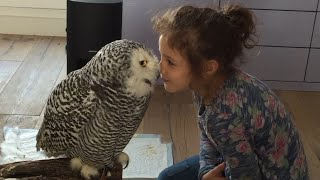 Download Little Girl and Owl Are BFF Video