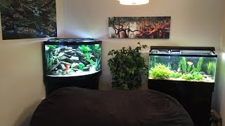 Download African Cichlid 55g Corner Tank Update... Got Fish? Video
