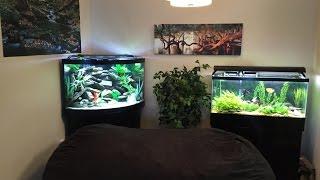 Download African Cichlid 55g Corner Tank Update... Got Fish? Video