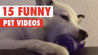Download 15 Funny Pet Videos Compilation 2016 Video