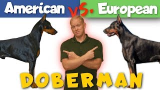 Download American vs. European Doberman: Which is Better? Video