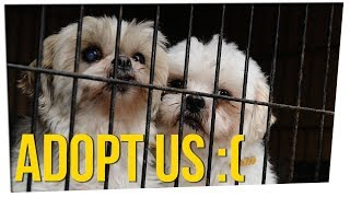 Download California First State to Ban Non-Rescue Pet Shop Sales ft. Gina Darling & DavidSoComedy Video