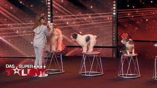 Download Alexa dressiert ihre acht Hunde wie ein Profi | Das Supertalent 2017 | Sendung vom 30.09.2017 Video