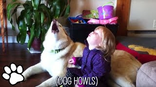 Download Most Amazing Dogs of 2018 | Funny and Cute Dog Compilation Video
