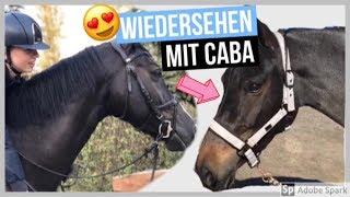 Download CABA KOMMT ZU BESUCH - wiedersehen nach dem VERKAUF 😍! | FMA am Stall + Novi reiten 😁⭐️ Video
