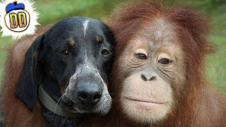 Download 15 Bizarre Animal Friendships Video