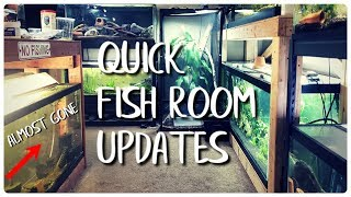 Download YOU FORGOT I HAD THESE! Quick Fish Room Update Video