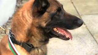 Download War dog Mali awarded medal for bravery Video