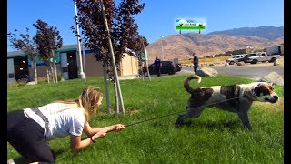 Download Hope For Paws rescuer dragged by 110 pound dog as she tried to save him! EPIC VIDEO! Video