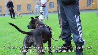 Download Gevangenen trainen asielhonden Video