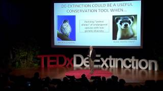 Download De-extinction: a game-changer for conservation biology: Stanley Temple at TEDxDeExtinction Video