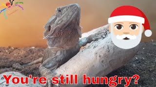Download Merry Christmas - My Inverts & Reptiles meet Dubia Video