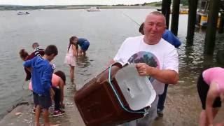 Download Mackerel Breaking In Youghal Harbour Video