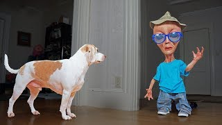 Download Dog vs Alien in Disguise Prank: Funny Dogs Maymo, Penny & Potpie Video