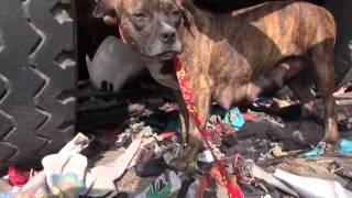 Download Touchant sauvetage d'un chien errant, apeuré qui se termine par une étonnante surprise! Video