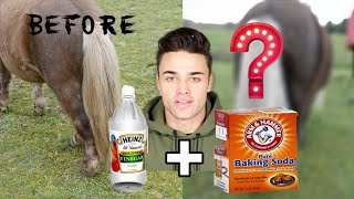 Download TRYING HORSE LIFE HACKS...(CRAZY RESULT) Video
