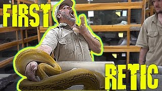Download First Retic Don't do this EVER ! with a BIG PYTHON Video