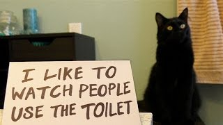 Download Ultimate Cat Shaming! Video