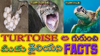 Download Interesting Facts in Telugu About Tortoise,Interesting and Unknown Facts in Telugu Video