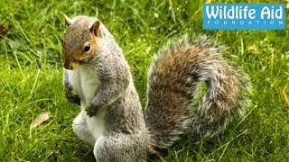 Download Squirrel terrorizes old lady... Funny Animal Rescue Video