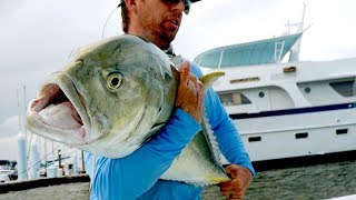 Download Fishing for Inshore MONSTERS by the Docks Video