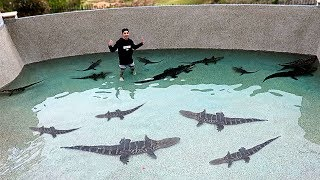 Download I Filled my Pool with DEADLY ALLIGATORS!! **SWIMMING WITH THEM** Video