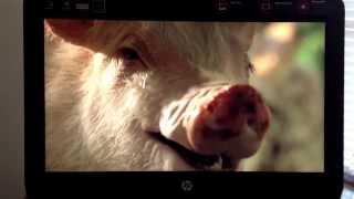 Download Dog Kill A Sheep Video