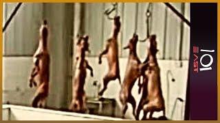 Download 101 East - China's animal crusaders Video