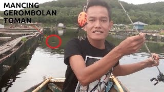 Download Casting(mancing)GEROMBOLAN TOMAN(SNAKEHEAD)PAKAI JF,by A.B.pb Video
