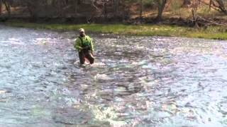Download A Beginners Guide To Wet Fly Fishing, Holsinger's Fly Shop Video