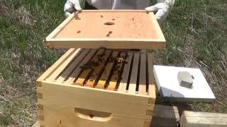 Download Bee Hives - First inspection after Installation Video
