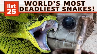 Download 25 Of The World's Most Venomous Snakes Video