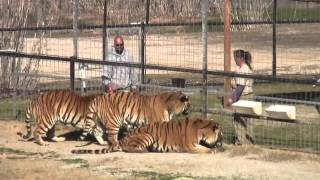 Download Joe Schreibvogel Ordered to Pay Real Big Cat Sanctuary $1 million Video