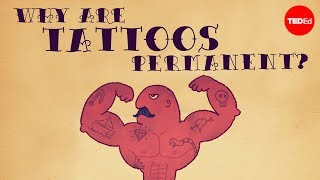 Download What makes tattoos permanent? - Claudia Aguirre Video