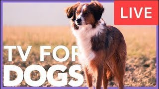 Download TV for Dogs! Entertainment for Dogs and Puppies with Calming Music! Video