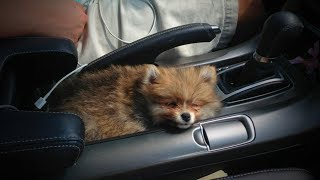 Download Cute Puppies 😂🐶 Funny and Cute Little Dogs (Part 1) [Funny Pets] Video